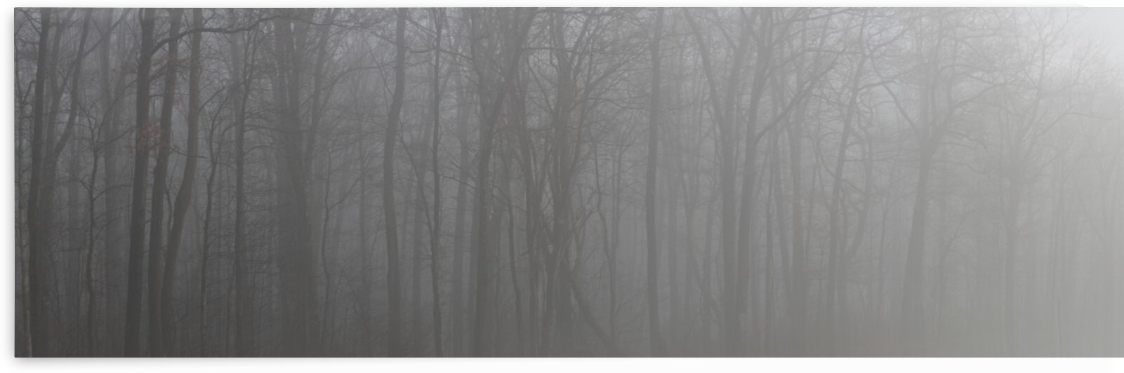 Treeline apmi 1546 by Artistic Photography