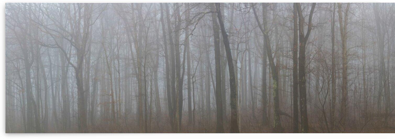 Treeline apmi 1544 by Artistic Photography