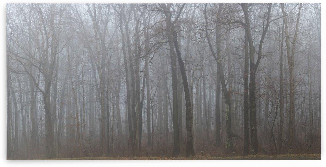 Treeline apmi 1547 by Artistic Photography