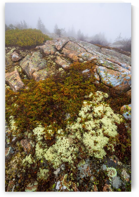 Lichen and Granite ap 2355 by Artistic Photography