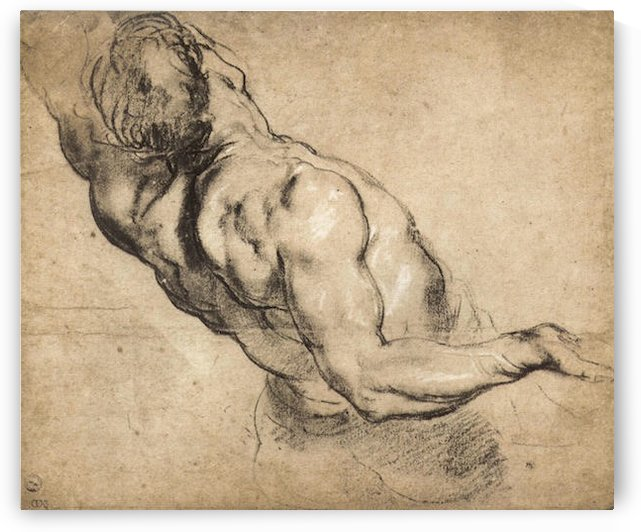 Study of man s torso by Rubens by Rubens