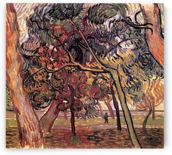 Study of Pine Trees by Van Gogh by Van Gogh