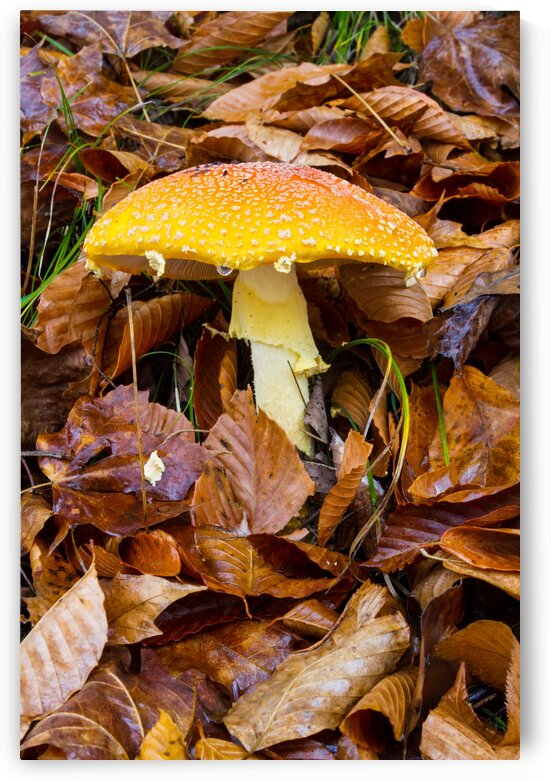 Mushroom ap 1578 by Artistic Photography