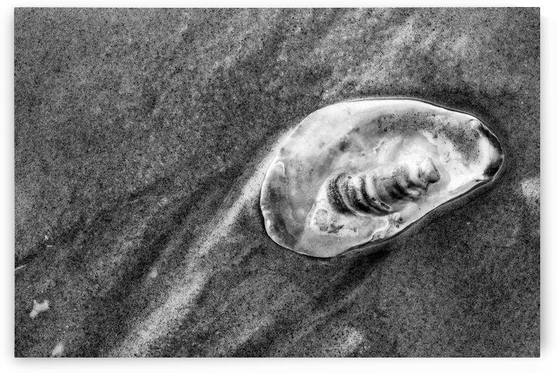 Sea Shells ap 2141 B&W by Artistic Photography