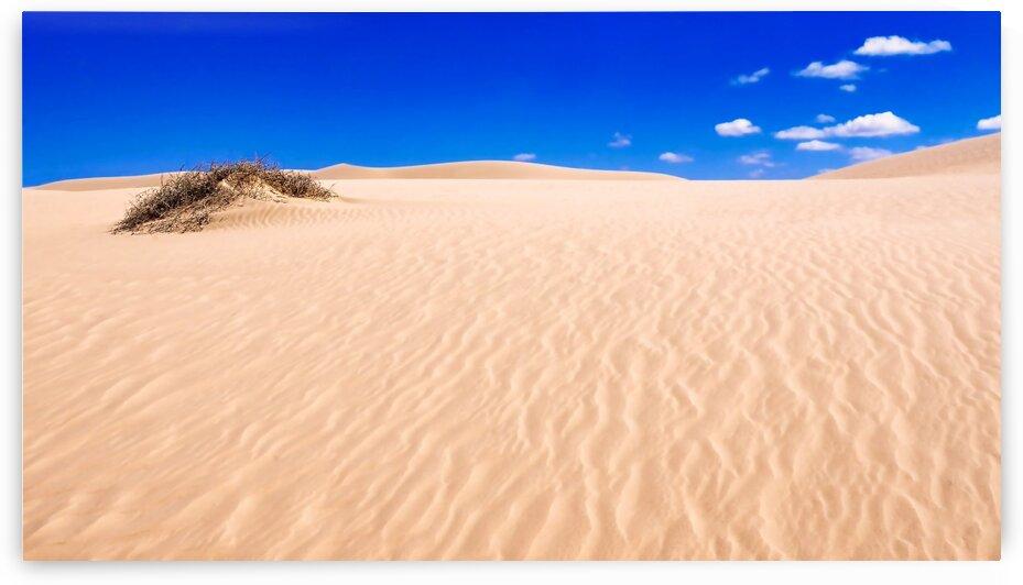 Pink Sandhills - Mungo NP by Lexa Harpell