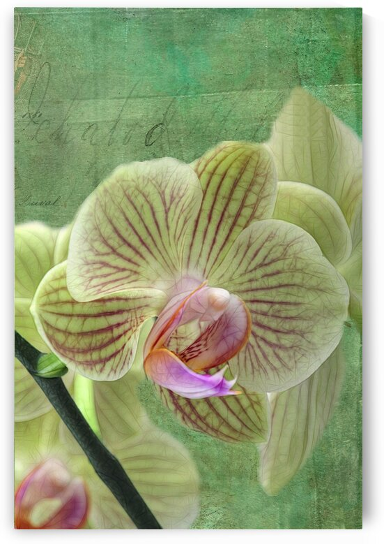 Green orchid by Denis Brien