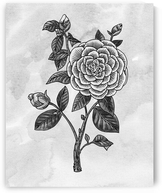 Camellia Simple Gray Botanical Flower On Watercolor Marble  by Irina Sztukowski