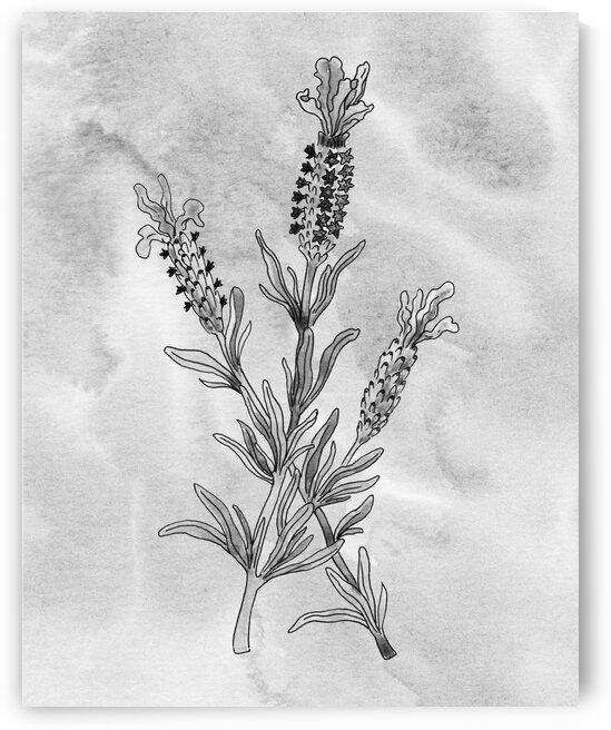 Lavender Simple Gray Botanical Flower On Watercolor Marble  by Irina Sztukowski