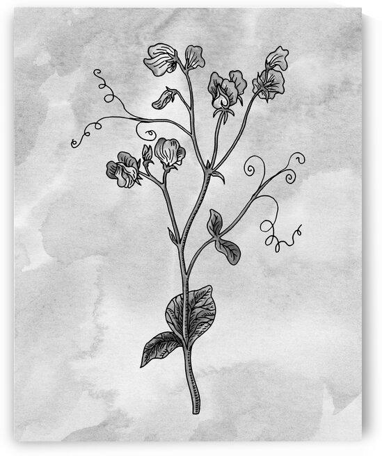 Sweet Pea Simple Gray Botanical Flower On Watercolor Marble  by Irina Sztukowski
