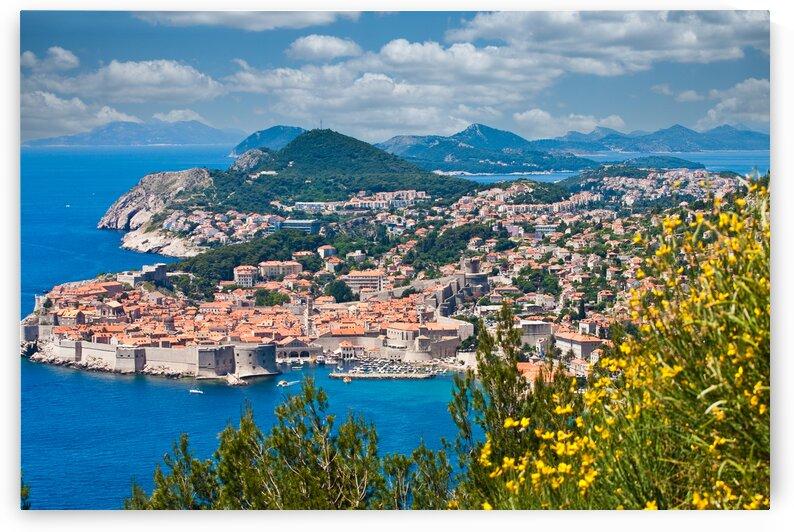 Beautiful Dubrovnik Past Yellow Flowers by Darryl Brooks