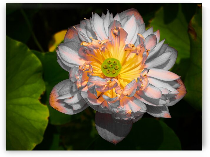 Two-Tone Silver and Gold Lotus Flower by Michaela Scherr