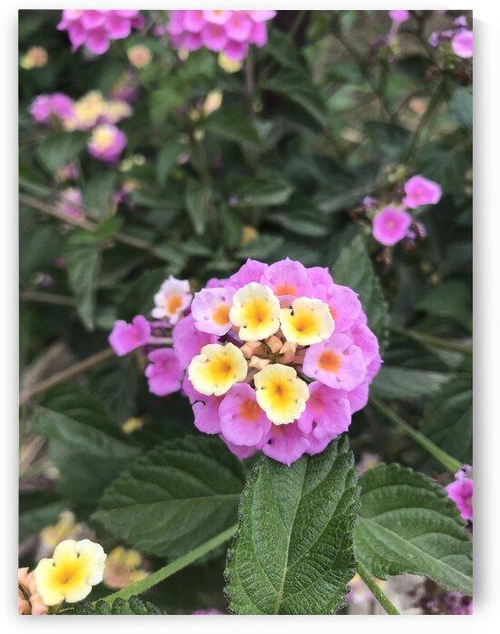 Just a beautiful flower  by Anita Varga