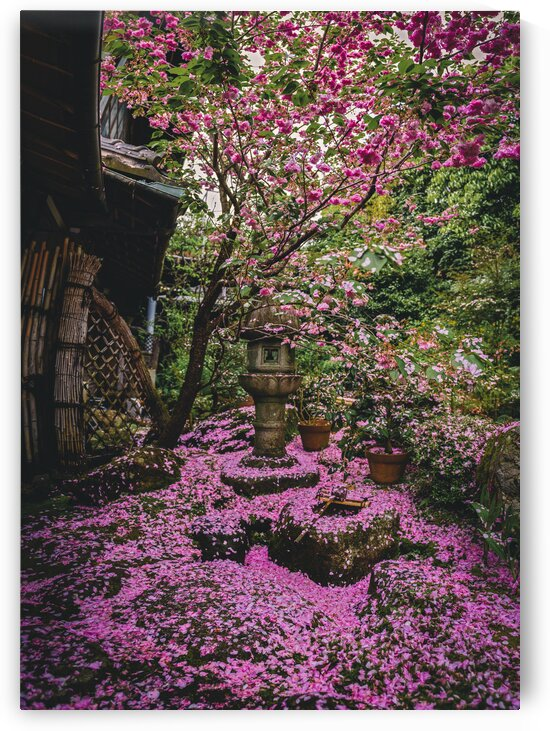 Living Blossoms in Kyoto  by Raisa Mirza