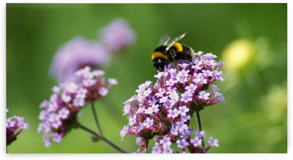 Busy Bee by Pixcellent Adventures