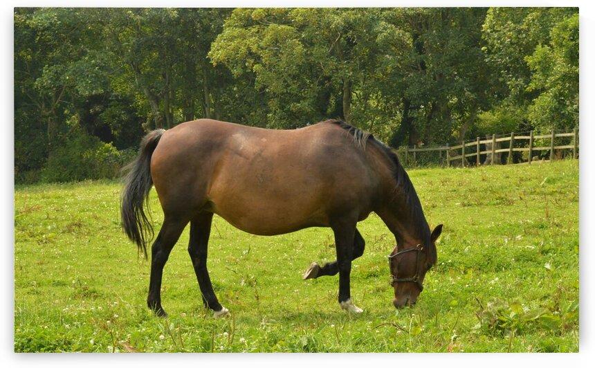 Horse Etiquette by Pixcellent Adventures
