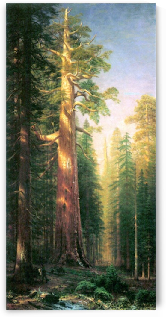 The big trees, Mariposa Grove, California by Bierstadt by Bierstadt