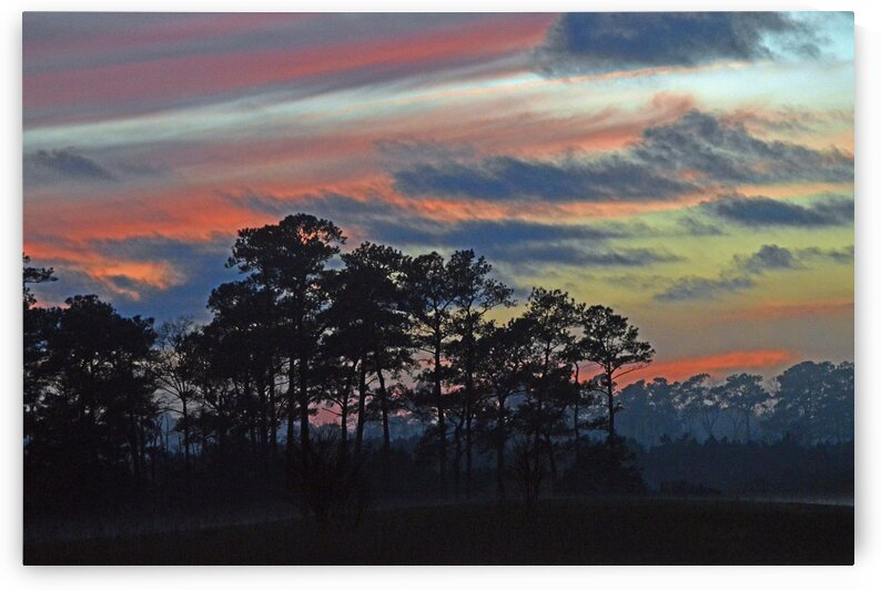 Late Sunset Trees in the Mist by Ocean City Art Gallery