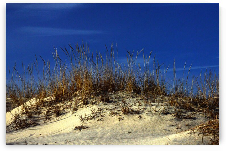 Winter Morning on the Dunes by Ocean City Art Gallery
