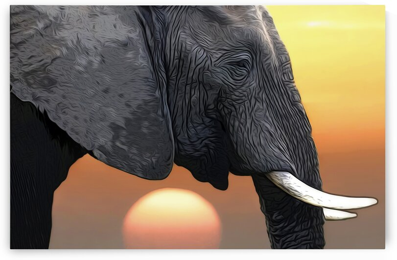 Elephant in front of Sunset by Adrian Brockwell