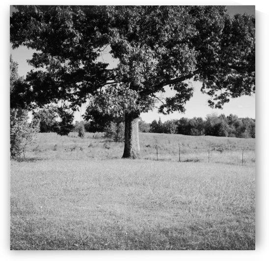 Old Tree by Douglas Harbin