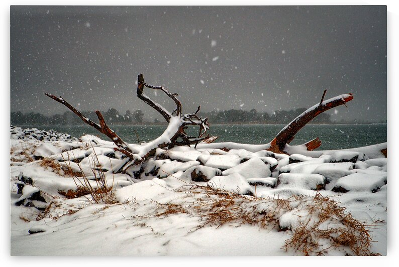 indian river inlet driftwood snow 3x2 2150027 by Bill Swartwout Photography