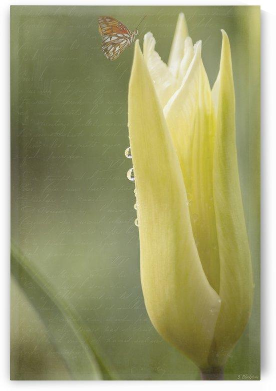 Spirit Of Love - Spring Art by Jordan Blackstone by Jordan Blackstone