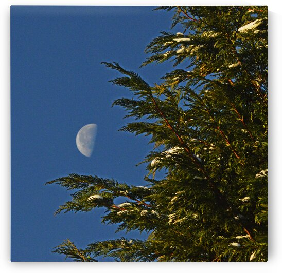 christmas moon tree 1421 by Bill Swartwout Photography