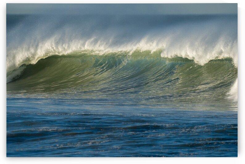 Morning Wave by Bryan Caplis