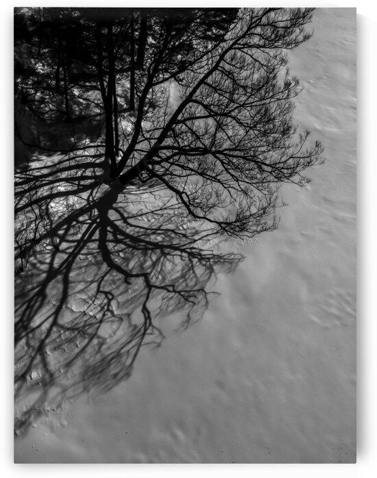 Nature life   11  by Jean-Francois Dupuis
