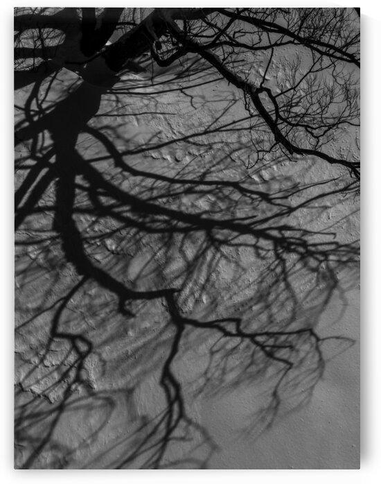 Nature life   12  by Jean-Francois Dupuis