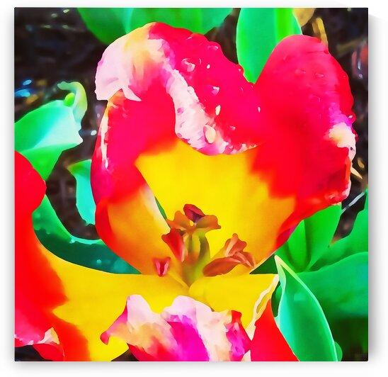 heart flower by Pierce Anderson