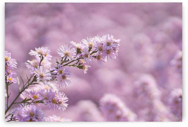 The pink flower in bloom by Krit of Studio OMG