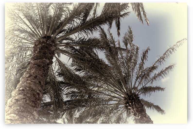 palm trees artistic by realimpressions