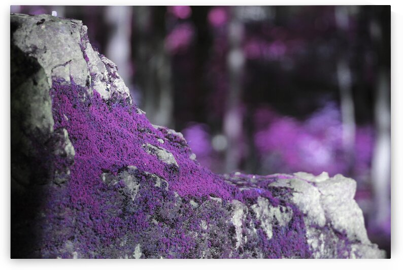 grape jelly moss by Artistic Images and Photography