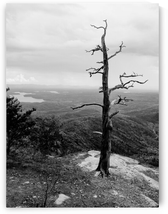 Dead Tree in Linville Gorge by Adam Mobley
