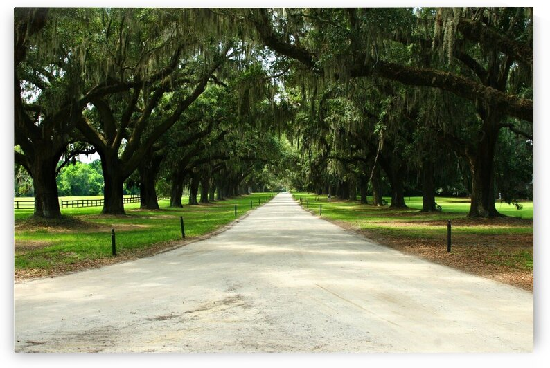 Drive at Boone Hall Plantation by Adam Mobley