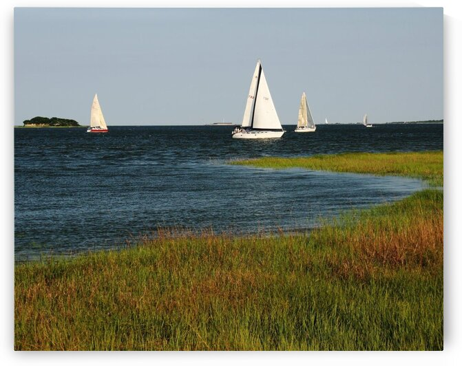 Sail Boats in Charleston Harbor by Adam Mobley