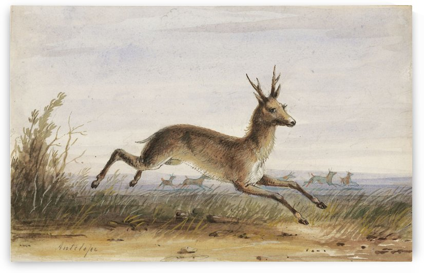Antelope by Alfred Jacob Miller