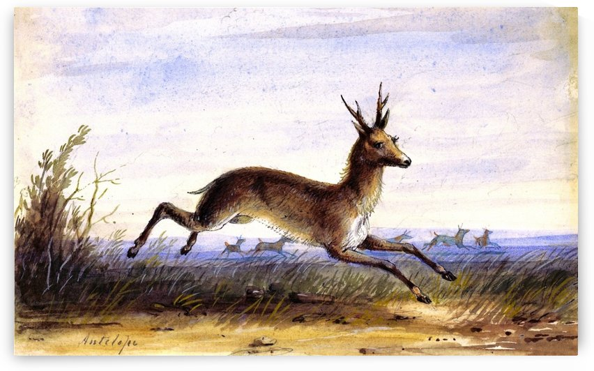 Antelope running by Alfred Jacob Miller