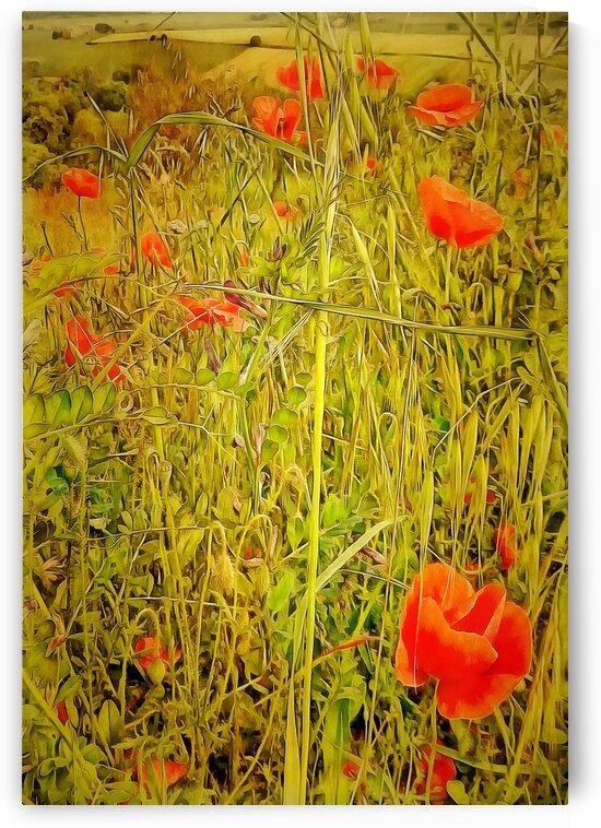 Poppy Tapestry by Dorothy Berry-Lound