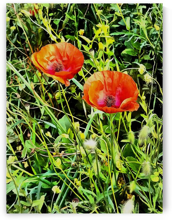 Poppy Beauties by Dorothy Berry-Lound