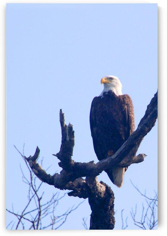 eagle left eye view 0604 by Dan Sheridan Photography
