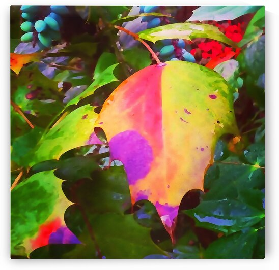 Color Burst by Pierce Anderson