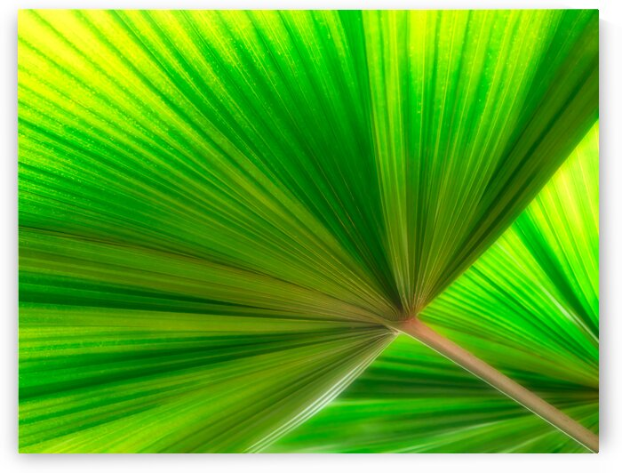 Palm Leaves by Diane Lynn