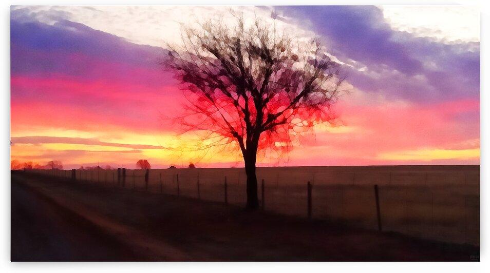 still morning by Pierce Anderson