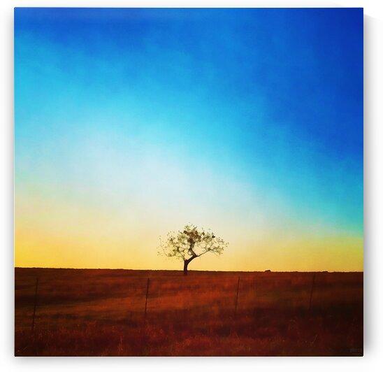 solitude tree by Pierce Anderson