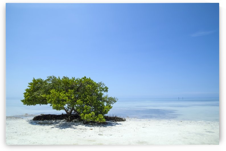 FLORIDA KEYS Lonely Tree by Melanie Viola