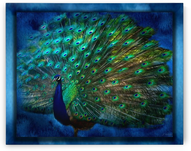 Being Yourself - Peacock Art by Jordan Blackstone by Jordan Blackstone