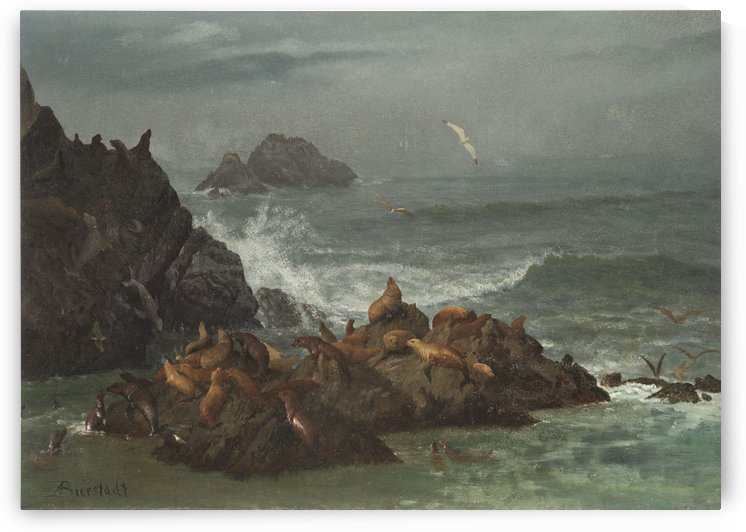 Seals on rocks by Albert Bierstadt