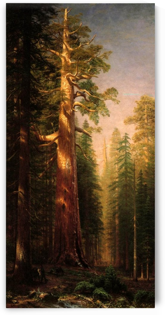 The Great Trees, Mariposa Grove, California Grove, 1876 by Albert Bierstadt